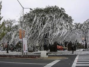 туалетная бумага, розыгрыши