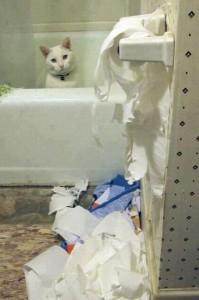 туалетная бумага и кошки