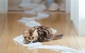 туалетная бумага коты