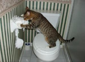 туалетная бумага смешные кошки