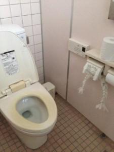 туалетная бумага поделки